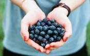 2e Congres Sport & Voeding | De kracht van voeding bij sport