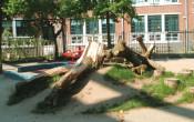 Meer groen op het schoolplein