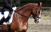Tips om veilig en blessurevrij paard te rijden