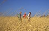 Wetenschap: groen zet kind in beweging